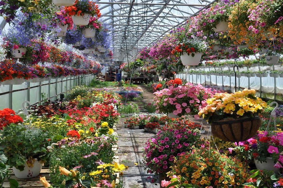 Теплицы в оренбурге где продают цветы оптом
